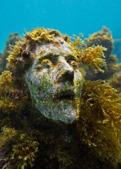 La Evolución Silenciosa (The Silent Evolution) By Jason de Caires Taylor. This is an underwater sculpture garden in Cancun, Mexico. The concept is so interesting and the images are just incredible! Underwater Sculpture, Underwater Plants, Sea Sculpture, Underwater Art, Underwater Photography, Sculpture Garden, Film Photography, Jason Decaires Taylor, Sunken City