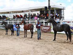 Taís Paranhos: Cavalos impulsionam economia e Turismo Rural de Gr...