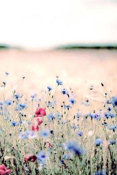 Wild flowers                                                                                                                                                      More