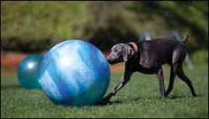 old laundry line or fence pole tether ball for your dog just add