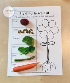 This is a great hands-on way to teach parts of the plant for a spring or garden unit. They may be surprised by which parts they are eating! Kindergarten Science, Preschool Learning, Teaching Science, Science For Kids, Preschool Activities, Kindergarten Assessment, Elementary Science, Preschool Art, Plant Lessons