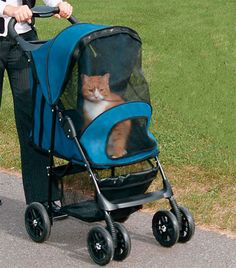 Cat strollers, for when you want weird looks from morning joggers.   22 Totally Ludicrous Products For Cat Owners