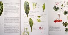 Malarstwo botaniczne: Nowe książki! Szczęśliwy dzień!