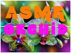 ASMR Orchid – fundamentals of care http://www.youtube.com/watch?v=OfQ-6EsiRmA