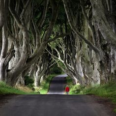 Ancient Yew Trees, Catalonia, Spain.. Wouldn't this make a neat driveway?