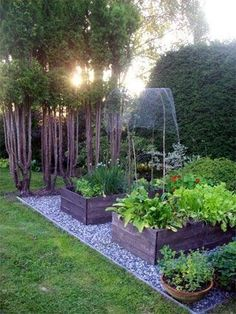 Small and simple backyard garden with individual beds, pots, and small garden trees