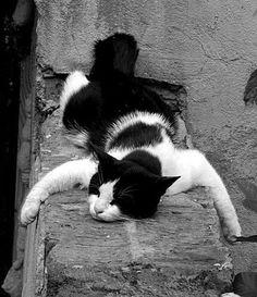 Cats W & B/Mistress Annalisa