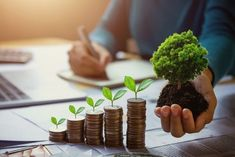 business woman hand holding tree with plant growing on coins. concept saving money and earth day - Buy this stock photo and explore similar images at Adobe Stock Le Large, Small Business Accounting, Earth Day, Business Women, Saving Money, Blog, Stock Photos, Place, Free Images