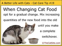 More cat tips by thecatsite.com