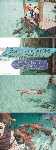 Compass Cay Exumas Bahamas Swimming with sharks  Blog | Eve Greendale Photography | Palm Beach Portrait Photographer