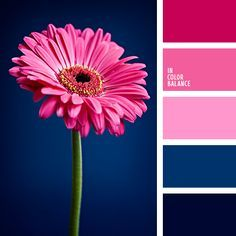 Color Palette Bright pink and contrasting dark blue will create an extraordinary play of light if you use them in kitchen decor. Also, this palette is suitable for livin. Pink Color Schemes, Colour Pallette, Color Combinations, Pink Palette, Color Generator, Pantone, Color Balance, Balance Design, Design Seeds