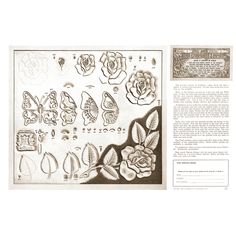 Leathercraft Library - Roses and Butterfly by Al Stohlman (Series 3 Page 5)