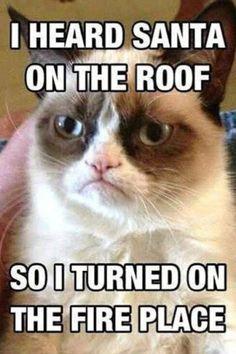 Image result for grumpy cat meme