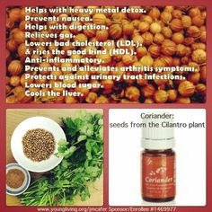 "Coriander is one of the oils in our daily ""Oil Infused Living""... we use it to help with diabetes, cholesterol, digestion  detox.. Are you ready to learn more?? Ask me more!!!"