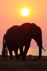 Elephant in Matsuadona National Park, Zimbabwe