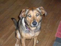 ROSEY has been found  LAST SEEN SIMSBURY, CT 06070 HOP HALLOW RD & OLD FARMS…