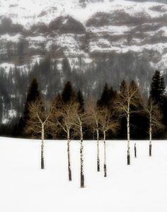 Cindy Goeddel: Lamar Valley of Yellowstone National Park. Winter in Yellowstone is mysterious, rigorous, unpredictable and serene. Lamar Valley, Winter's Tale, Yellowstone National Park, Landscape Photos, Photo Contest, Mother Nature, Photo Art, Art Photography, Wildlife