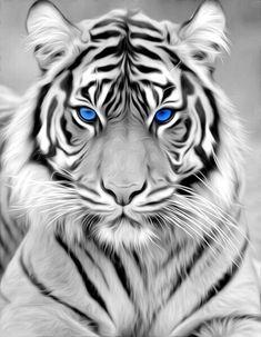 Lion Live Wallpaper, Wild Animal Wallpaper, Tiger Wallpaper Iphone, Majestic Animals, Animals Beautiful, Tiger Spirit Animal, Baby Animals, Cute Animals, Tiger Artwork