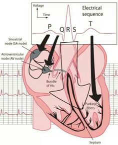 EKG readings (useful) http://hyperphysics.phy-astr.gsu.edu/hbase/biology/ecg.html