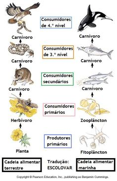 Food Chain Vocab (Primary Producers// Primary, Secondary, Tertiary, and Apex Predators) Teaching Biology, Science Biology, Science Lessons, Science Education, Science Activities, Life Science, Rainforest Activities, Student Teaching, 7th Grade Science