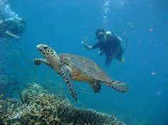 Pulau Tioman Malaysia Ted Frank
