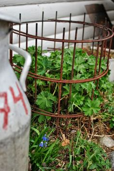HANNAS: trädgård Container Gardening, Gardening Tips, Peony Support, Summer House Garden, Growing Gardens, Garden Trellis, Garden Care, Garden Structures, Garden Ornaments