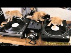Cats compilation June 2015