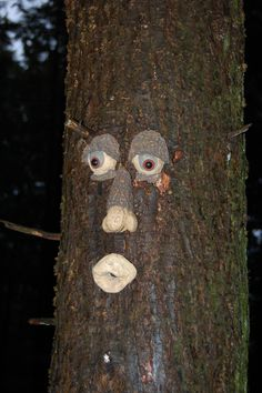 and sometimes these forest's have trees that seem alive, and are hiding the cache right under their nose.