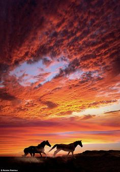 sunset+horses=pure beauty  this reminds me, I need to go for a ride badly!!