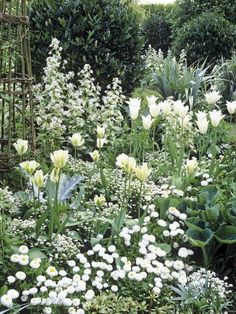a moon garden.I've always wanted a moon garden! Dressed in White White forget-me-nots, tulips, daisies and money plant combine with hostas and silvery astelia foliage in this spring garden. Spring Garden, Outdoor Gardens, Beautiful Gardens, White Flowers, Cottage Garden, Plants, Moon Garden, Dream Garden, White Gardens