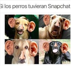 Perro chat :D