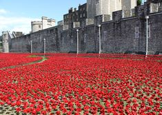 Porcelain poppies surround the Tower of London to commemorate World War I. @cliostorks @cioncobinoco :)