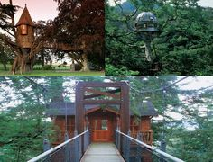 forget the normal type of house i want a tree house