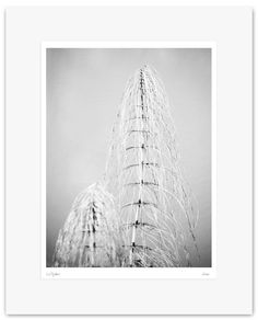Fine Art Print, Black and White Photography - Archival Print - Mounted, Limited Edition, Contemporary Wall Art - Wood - Bosco #03 by Muteimage on Etsy