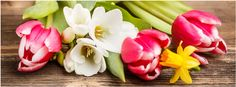Pink Tulips, Spring Flowers ~ facebook cover photo