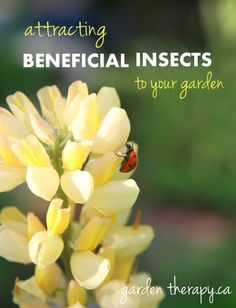 Attracting Beneficial Insects to Your Garden #EarthDay from Garden Therapy