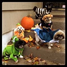 Halloween Doggies ;)