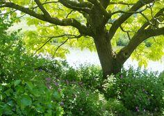 Pflanzbeete unter Bäumen anlegen