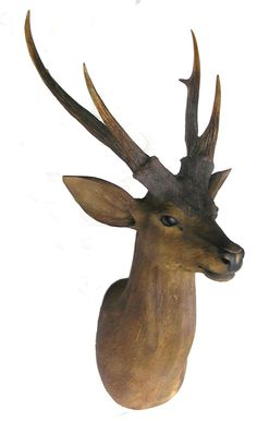 Its a wood carving! Tree Carving, Carving Wood, Wood Carvings, Tree Sculpture, Sculptures, Ohh Deer, Mural Wall Art, Animal Projects, Forest Friends