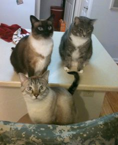 Family portrait! Poe with her sons Beckett and Kafka <3