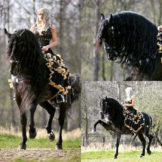 Fifth Wheel Trailers – The Towing Guide Hunting Outfitters, Horse Riding Clothes, Andalusian Horse, All About Horses, Black Horses, Closer To Nature, Horse Farms, Horse Love, Zebras