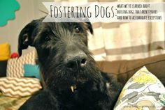 Foster A Dog Successfully -- Tips! www.vcas.us #FosterNow #Puppies