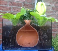 Home made Olla pot Clay Pot Irrigation System info: www ...
