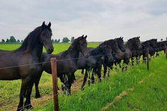 Western Riding