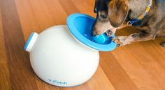 This Toy Plays Fetch With Your Dog When You're Not at Home via Brit + Co.