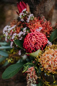 beautiful flowers and their meanings Floral Wedding, Wedding Bouquets, Wedding Flowers, Wedding Pins, Trendy Wedding, Wedding Decor, Australian Native Flowers, Event Signage, Shade Flowers