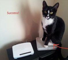 Cat gets decoy router!