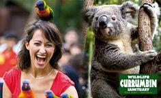 カランビン動物園でコアラを見えます