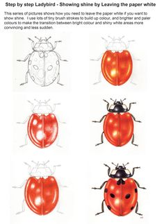 Step by Step Ladybird Watercolour illustration - Lizzie Harper Science Illustration, Botanical Illustration, Watercolor Illustration, Watercolour Painting, Painting & Drawing, Botanical Drawings, Insect Art, Art Techniques, Art Tutorials