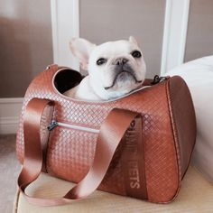 Pet Dog Carriers For Small Dogs and Teacup Puppies – TeaCups, Puppies & Boutique Small Pet Carrier, Dog Carrier Purse, Dog Carrier Bag, Teacup Puppies, Corgi Puppies, Designer Dog Carriers, Dog Grooming Business, Leather Roll, Dog Bag